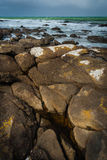 在风,新西兰的海岸线 免版税图库摄影
