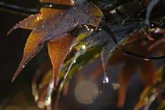 在风暴以后的秋天叶子 库存图片