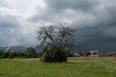 在风暴前的一棵偏僻的树 图库摄影