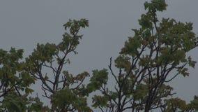 在风暴前的树上面 股票视频