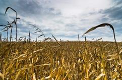在风暴前的被收获的麦地晚秋天 免版税图库摄影