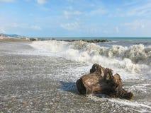 在风暴以后波浪冲上岸了一个树桩 库存图片