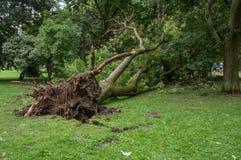 在风暴以后的下落的树 玛格丽特海岛,布达佩斯,匈牙利 免版税图库摄影