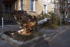 在风暴以后的下落的树 免版税库存照片