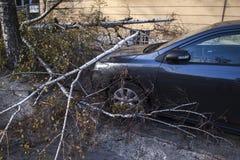 在风暴以后的下落的树 免版税库存图片