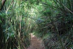 在风暴以后的竹森林 库存图片
