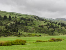 在风暴的豪华的山山麓小丘 免版税库存照片