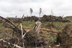 在飓风以后的树 免版税库存照片
