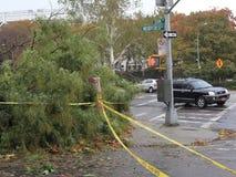 在飓风桑迪以后的损坏的树 影视素材
