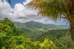 在飓风玛丽亚破坏被采取的美好的多米尼加山森林风景-自然海岛前 库存图片