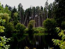 在飓风以后恢复的森林 免版税库存照片