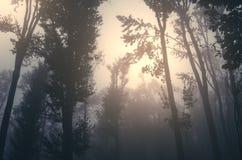 在飘渺森林的日落有雾的 图库摄影