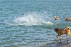 在飞溅完全地隐瞒的狗作为好朋友站立观看 免版税库存照片