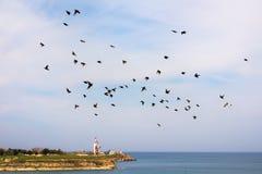 在飞行中椋鸟群  免版税图库摄影