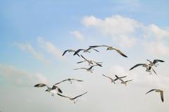 在飞行中海鸥 图库摄影