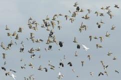 在飞行中涉水鸟混合物  免版税库存图片