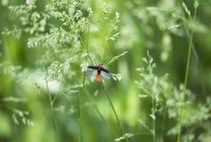 在飞行中甲虫 图库摄影