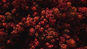 在飞行中秋天mouting的森林风景 影视素材