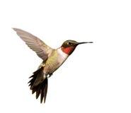 在飞行中红宝石红喉刺莺的蜂鸟男 免版税库存照片