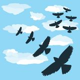 在飞行中鸟群 库存照片