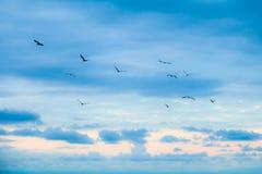 在飞行中鸟 库存照片