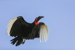 在飞行中鸟 免版税库存照片