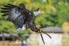 在飞行中鸟 免版税图库摄影