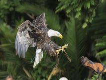 在飞行中鸟 库存图片