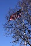 在飞行荣耀老结构树之后 免版税库存照片