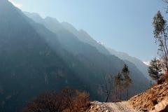 在飞跃峡谷的老虎的早晨 库存图片