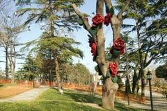 在飞鸟以后的一条英国塞特种猎狗狗和装饰由英国兰开斯特家族族徽做成在一棵树在一个公园在伊斯坦布尔 免版税图库摄影