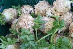 在食物市场上的菜在秋天月10月 库存图片