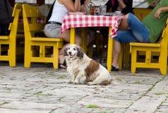 在餐馆桌前面的狗 免版税图库摄影