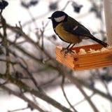 在饲养者的冬天山雀 免版税图库摄影