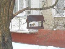 在饲养者的北美山雀在冬天 库存照片