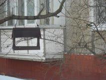 在饲养者附近的北美山雀在冬天 库存照片