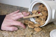 在饼罐的捕鼠器 免版税图库摄影