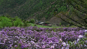 在香格里拉的春天 库存图片