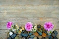 在香槟明白玻璃花瓶的美丽的开花的桃红色紫色大丽花花装饰在被弄脏的木拷贝空间背景与 免版税库存图片