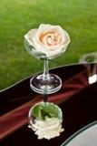 在香槟玻璃的一朵白色玫瑰 免版税库存照片