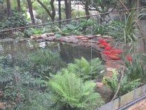 在香港动物学&植物园的明亮的色的鸟 免版税库存照片