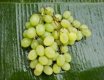 在香蕉叶子的可口湿葡萄 库存图片