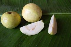 在香蕉叶子的番石榴果子 新鲜的psidium guajava 免版税库存图片