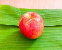 在香蕉叶子的苹果计算机 免版税库存照片