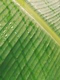 在香蕉叶子的雨 免版税图库摄影