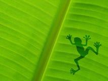 在香蕉叶子的青蛙阴影 免版税库存图片