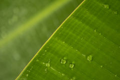 在香蕉叶子的水下落 图库摄影