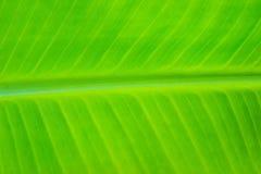 在香蕉叶子里面 免版税库存图片