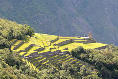 在马丘比丘的露台的领域-印加人失去的城市,每 免版税库存图片