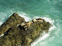在马利布、绿宝石和大海的封印在峭壁围拢的相当天堂海滩 Dume小海湾,马利布,加利福尼亚,加州 免版税图库摄影